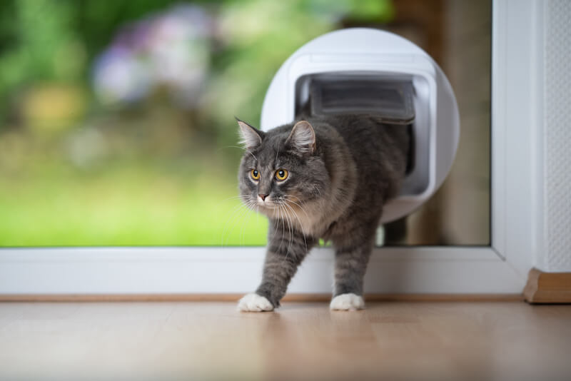 What To Know About Pet Doors And Whether Or Not You Should Have One In Your Home