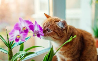 A List Of Pet Safe Houseplants (And Toxic Ones To Avoid)