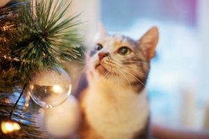 cat sniffing christmas tree | Ultimate Pet Nutrition