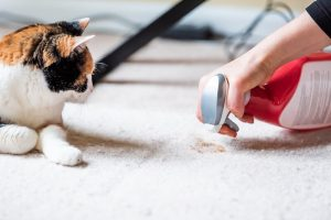 cleaning cat accident | Ultimate Pet Nutrition