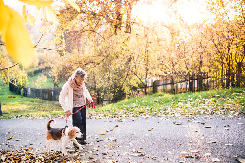 senior walking dog | Ultimate Pet Nutrition