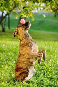 dog doing ball trick | Ultimate Pet Nutrition