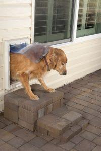 doggie door | Ultimate Pet Nutrition