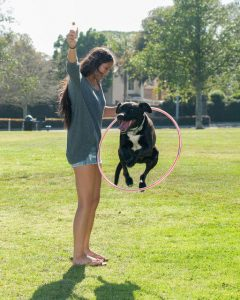 dog jumping through hoop | Ultimate Pet Nutrition