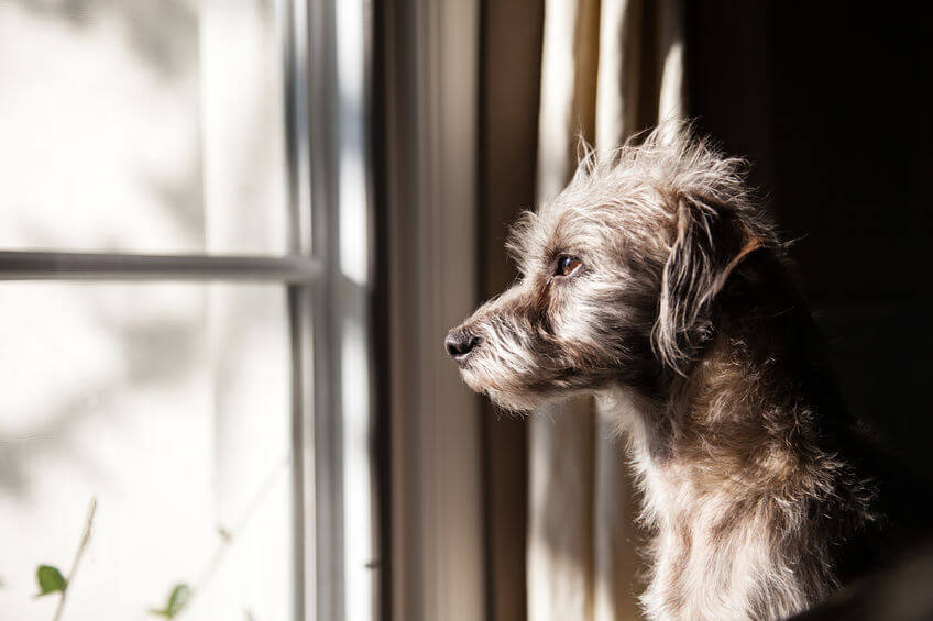 Dog Freaking Out Every Time You Leave? Learn All About Separation Anxiety In Dogs