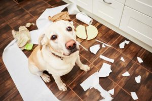 dog making mess | Ultimate Pet Nutrition