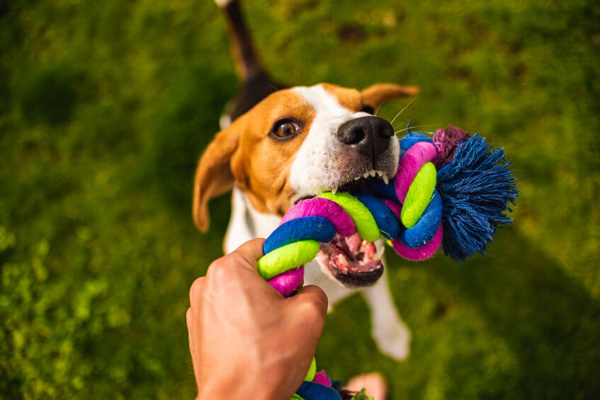 dog playing tug of war | Ultimate Pet Nutrition