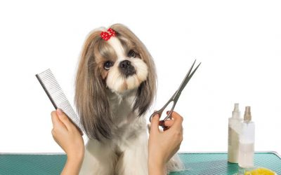 How To Groom A Dog At Home: Info For Pet Parents