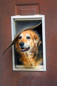 happy dog doggie door | Ultimate Pet Nutrition