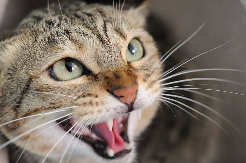 Cat Behavior Problems That All Cat Parents Should Watch Out For
