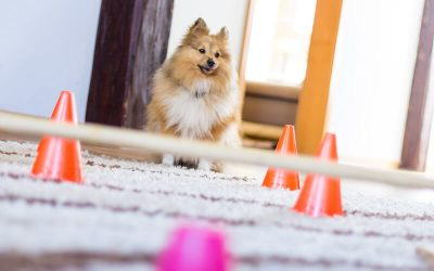 indoor dog obstacle course | Ultimate Pet Nutrition