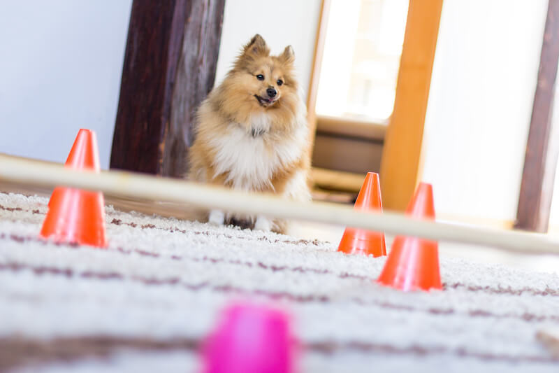 Indoor Dog Activities: Exercise For Your Pet When The Cold Weather Hits