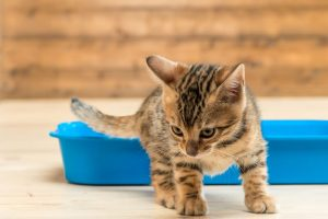 kitten litter box | Ultimate Pet Nutrition
