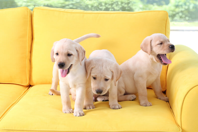 Bringing Home A Puppy: Training, Tips, And Tricks For New Pet Owners