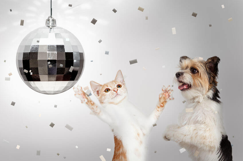 Happy New Year Dogs And Cats: Resolutions For Pet Parents