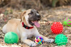 puppy chew toys | Ultimate Pet Nutrition