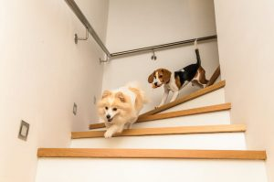 puppy playdate | Ultimate Pet Nutrition