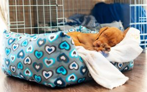 puppy sleeping in bed | Ultimate Pet Nutrition