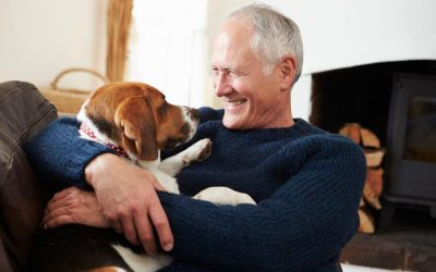 Great Dog Breeds For Seniors And Retirees