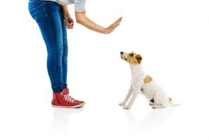 teaching dog to stay | Ultimate Pet Nutrition