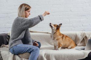 training dog indoors | Ultimate Pet Nutrition