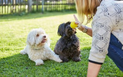 Fun Games To Play With Your Dog That Can Also Help With Training