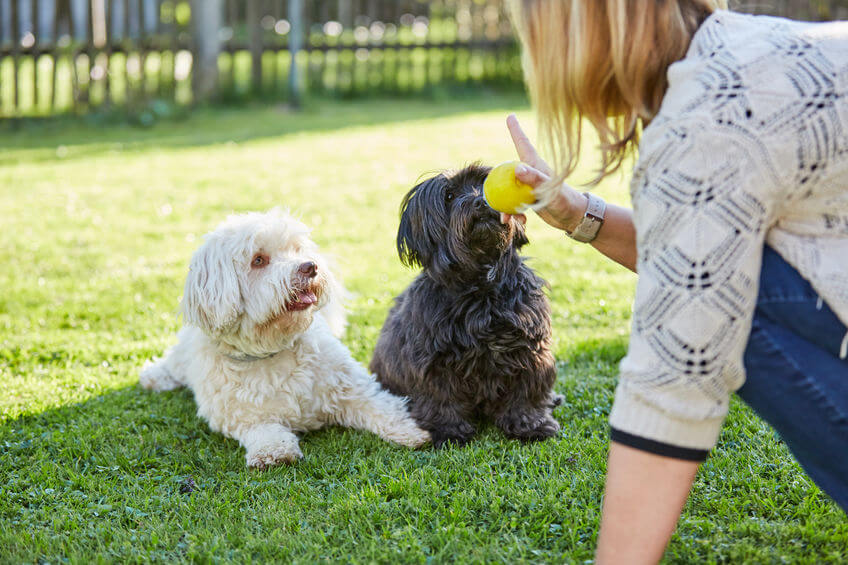 training dogs | Ultimate Pet Nutrition