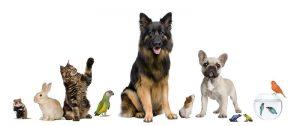 various pets | Ultimate Pet Nutrition