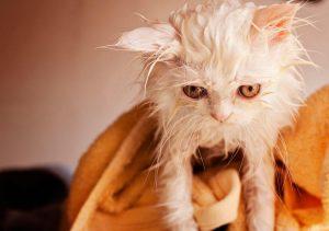 wet cat | Ultimate Pet Nutrition