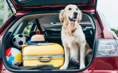 Dog Breeds That Are Ideal For Traveling Dog Parents