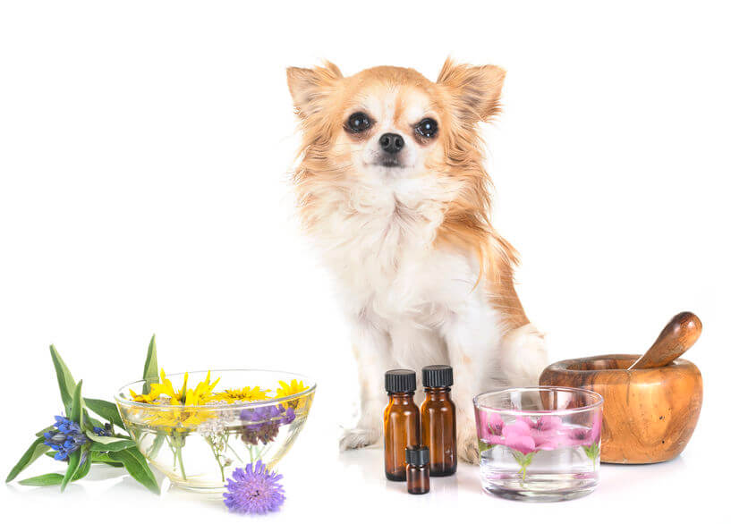 small dog with essential oils