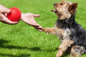 giving a dog a toy for positive reinforcement