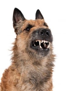 dog growling | Ultimate Pet Nutrition