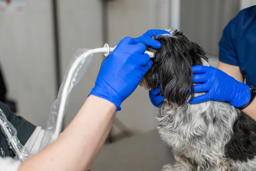 vet ultrasounding injured dog eye | Ultimate Pet Nutrition