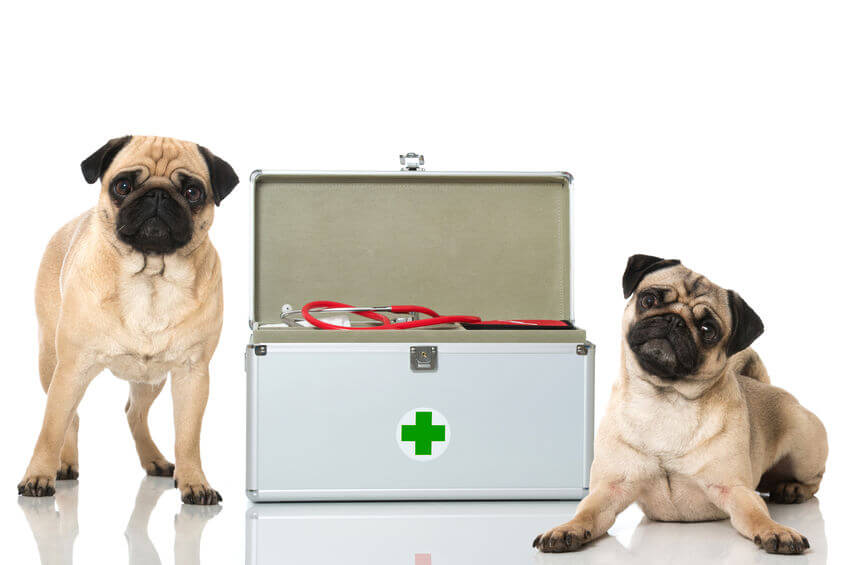 The Importance Of Having A Dog Or Cat First Aid Kit