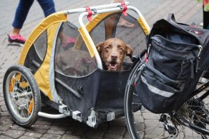 dog in bike trailer | Ultimate Pet Nutrition