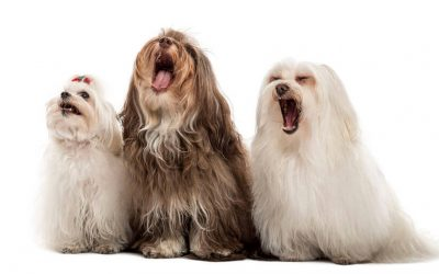 What Does It Mean When A Dog Yawns? It's More Than You Might Think