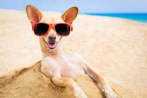 dog breeds for traveling parents   Ultimate Pet Nutrition
