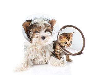 a dog and a cat in emergency collars
