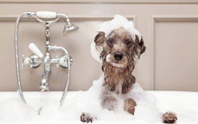 DIY Dog Bathing: Homemade Dog Shampoo Recipes