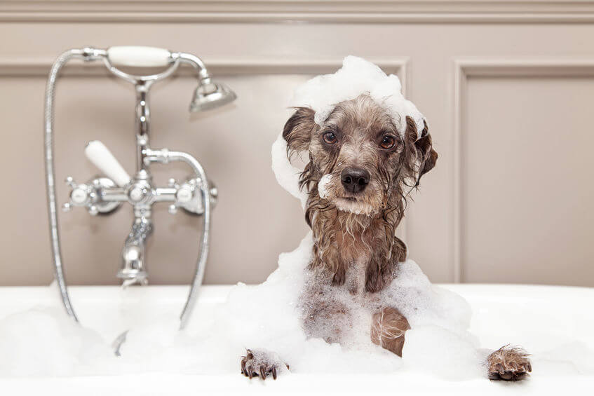 DIY Dog Bathing: Homemade Dog Shampoo Recipes