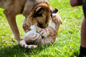 dog and cat playing | Ultimate Pet Discharge