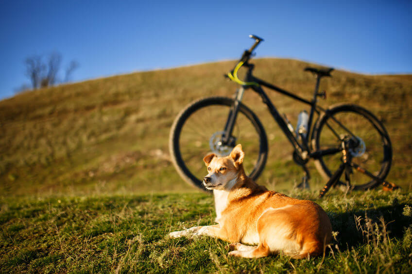 Biking With Dog: Training Your Large Dog To Run Next To A Bike (and Safety Concerns)