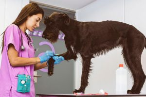 vet checking dog's leg | Ultimate Pet Nutrition