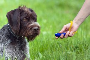 clicker training for dog