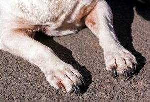 dog paws | Ultimate Pet Nutrition