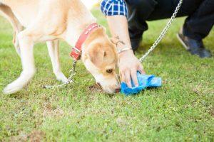 dog sniffing poop   Ultimate Pet Nutrition