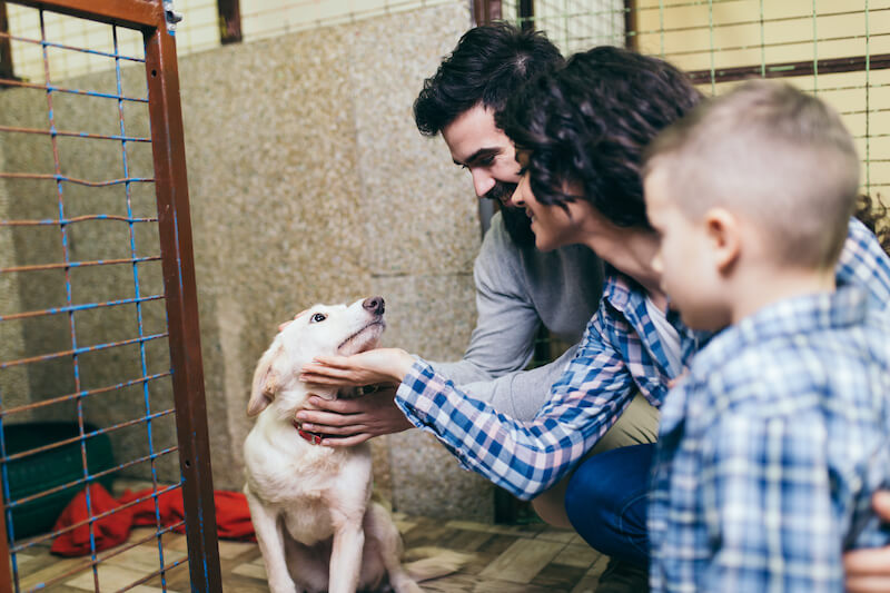 family adopting dog | Ultimate Pet Nutrition