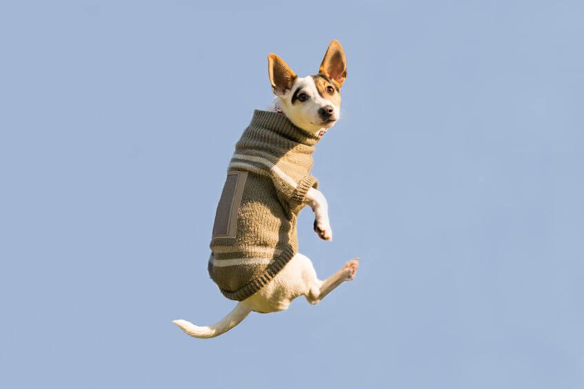 strange dog jumping | Ultimate Pet Nutrition