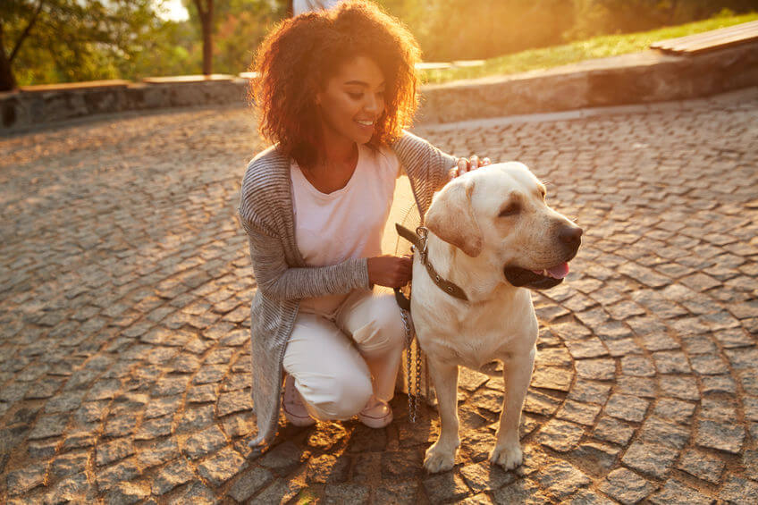 Info For Pet Parents: Responsible Pet Care For Optimal Health And Well-Being